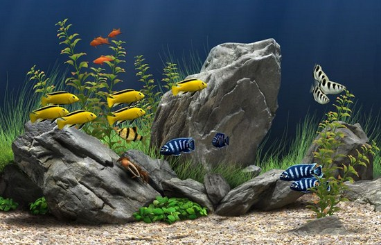 Dream Aquarium 3D Screensaver 1.24 (+30 ... - ������� ���������